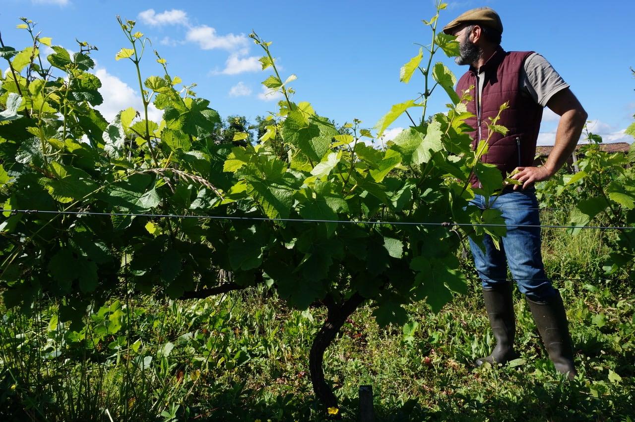 Vignerons Bio en Auvergne Rhône-Alpes